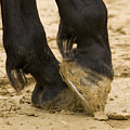 Horses Feet by Ian Middleton