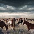 Horses Forever by Bill Stephens