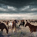 Horses Forever by Barbara Stephens