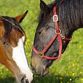 Horses by Gary Hancock