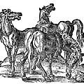 Horses by Granger