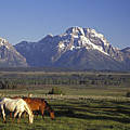 Horses Graze At Lost Creek Ranch by Richard Nowitz