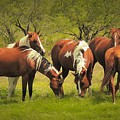 Horses Grazing by Dennis Nelson