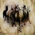 Horses  by Gull G