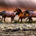 Horses Having A Paddle by Shabby Chic and Vintage Art