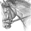 Horse's Head With Bridle by Sarah Parks