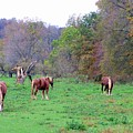 Horses In Autumn Amish Country by Charlene Cox