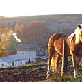 Horses In Autumn Frosty Sunrise by Charlene Cox