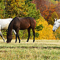 Horses In Autumn by Predrag Lukic
