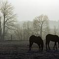 Horses In Field by Steve Somerville