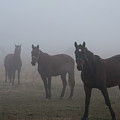Horses In The Fog by David Arment