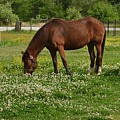 Horses In The Meadow 2 by Eileen Brymer