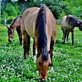 Horses In The Meadow by Eileen Brymer