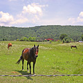 Horses In The Pasture by Anne Cameron Cutri