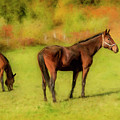 Horses In The Pasture by Ken Morris