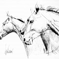 Horses - Ink Drawing by Daliana Pacuraru