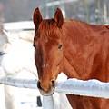 Horses by Jaroslaw Grudzinski