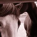 Horses by Katherine Huck Fernie Howard