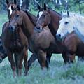 Horses Looking by Eleszabeth McNeel