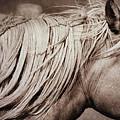 Horse's Mane by Michael Ziegler
