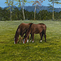 Horses Of Romance by Mary Ann King