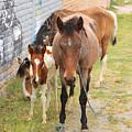 Horses On A Street by Robert Hamm