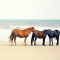 Horses On Beach by Beach Bum Chix
