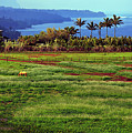 Horses On The Garden Island Of Kauai, Hawaii, Usa by Sam Antonio Photography