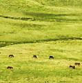 Horses by Osvaldo Hamer