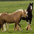 Horses Photography by Angel Ciesniarska
