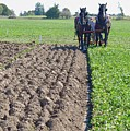 Horses Plowing Rows Two  by Lyle Crump