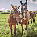 Horses by Sophie McAulay
