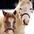 Horses by Stephane Delbecq