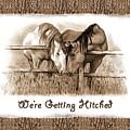 Horses Western Wedding Invitation Getting Hitched by Joyce Geleynse
