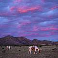 Horses With New Mexico Sunset by Enrique Navarro