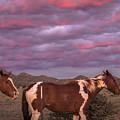 Horses With Southwest Sunset by Enrique Navarro