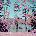 Horseshoe Conservation Area Infrared by Alan Look