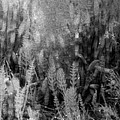 Horsetail Plant Panorama Two  by Lyle Crump