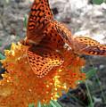 Horton Butterflies by Ray Hunt