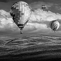 Hot Air Balloons In Black And White Over Fields by Randall Nyhof