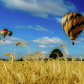 Hot Air Balloons Over A Wheat Field by Pixabay