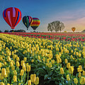 Hot Air Balloons Over Tulip Fields by William Freebilly photography
