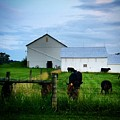 Hot Eve Night On The Farm by Rancher's Eye Photography