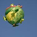 Hot Frog by Dennis Hammer