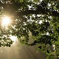 Hot Golden Mists Of Summer by Georgia Mizuleva