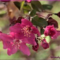Hot Pink Blossoms by Wendy Fox