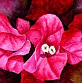 Hot Pink Bougainvillea by Darla Brock