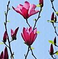 Hot Pink Magnolias by Sarah Loft