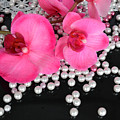 Hot Pink Orchids 2 by To-Tam Gerwe