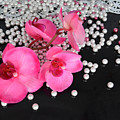 Hot Pink Orchids by To-Tam Gerwe